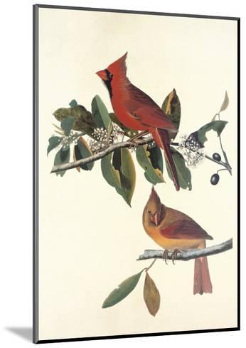 Cardinal Grosbeak-John James Audubon-Mounted Art Print