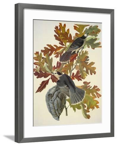 Canada Jay-John James Audubon-Framed Art Print