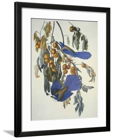 Florida Jay-John James Audubon-Framed Art Print