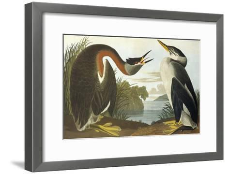 Red-Necked Grebe-John James Audubon-Framed Art Print