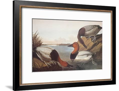 Canvas-Backed Duck-John James Audubon-Framed Art Print