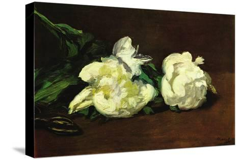 Still Life, White Peony-Edouard Manet-Stretched Canvas Print