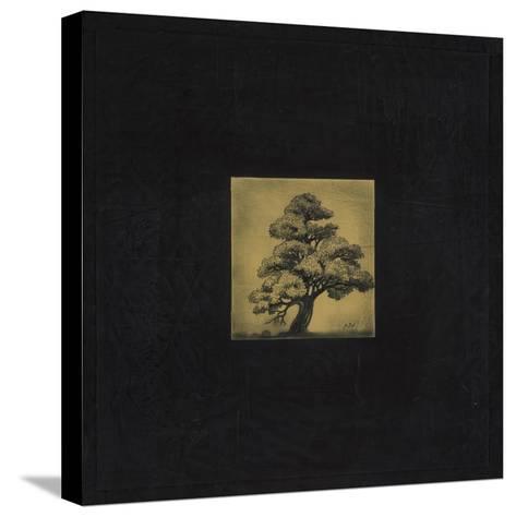 Bonsai Sacred Tree-OM-Stretched Canvas Print