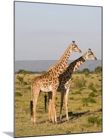 Masai Giraffe (Giraffa Camelopardalis), Masai Mara National Reserve, Kenya, East Africa, Africa-Sergio Pitamitz-Mounted Photographic Print