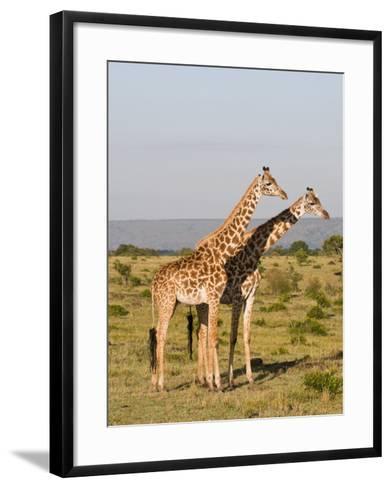 Masai Giraffe (Giraffa Camelopardalis), Masai Mara National Reserve, Kenya, East Africa, Africa-Sergio Pitamitz-Framed Art Print