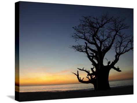 Baobab Tree, Sine Saloum Delta, Senegal, West Africa, Africa-Robert Harding-Stretched Canvas Print