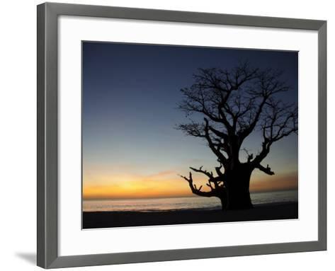 Baobab Tree, Sine Saloum Delta, Senegal, West Africa, Africa-Robert Harding-Framed Art Print