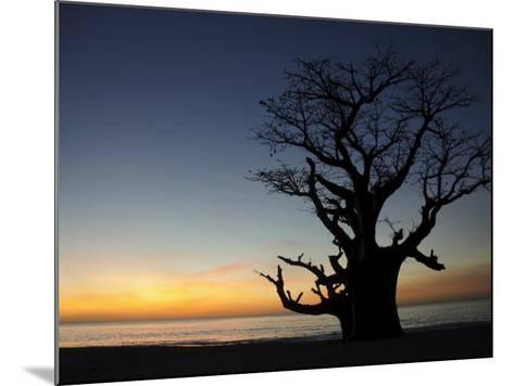 Baobab Tree, Sine Saloum Delta, Senegal, West Africa, Africa-Robert Harding-Mounted Photographic Print