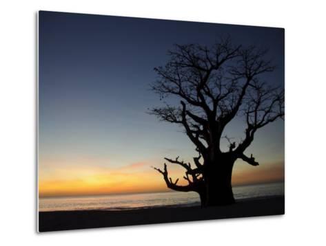 Baobab Tree, Sine Saloum Delta, Senegal, West Africa, Africa-Robert Harding-Metal Print