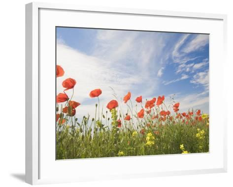Poppies, Highland of Castelluccio Di Norcia, Norcia, Umbria, Italy, Europe-Angelo Cavalli-Framed Art Print