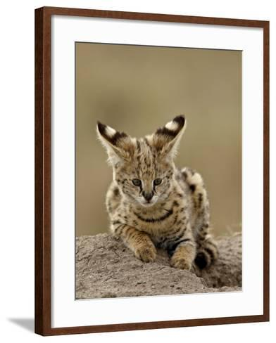 Serval (Felis Serval) Cub on Termite Mound, Masai Mara National Reserve, Kenya, East Africa-James Hager-Framed Art Print