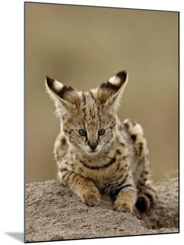 Serval (Felis Serval) Cub on Termite Mound, Masai Mara National Reserve, Kenya, East Africa-James Hager-Mounted Photographic Print