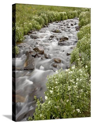 Stream Lined with Heartleaved Bittercress, San Juan National Forest, Colorado, Usa-James Hager-Stretched Canvas Print