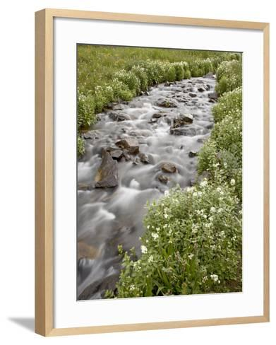 Stream Lined with Heartleaved Bittercress, San Juan National Forest, Colorado, Usa-James Hager-Framed Art Print