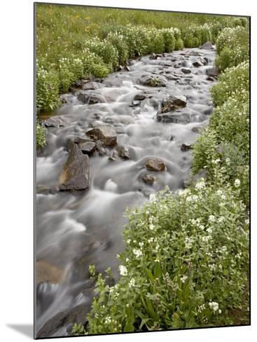 Stream Lined with Heartleaved Bittercress, San Juan National Forest, Colorado, Usa-James Hager-Mounted Photographic Print