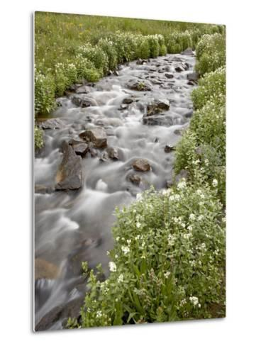 Stream Lined with Heartleaved Bittercress, San Juan National Forest, Colorado, Usa-James Hager-Metal Print