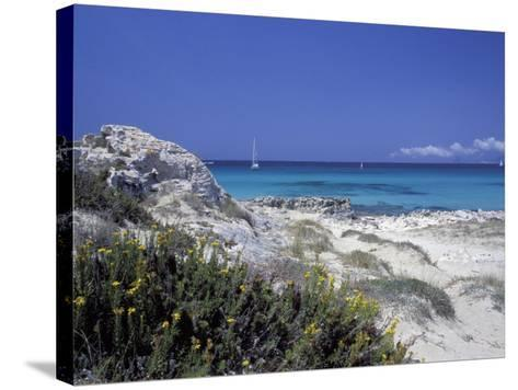 Yellow Flowers on the Beach, Formentera, Balearic Islands, Spain, Mediterranean, Europe-Vincenzo Lombardo-Stretched Canvas Print