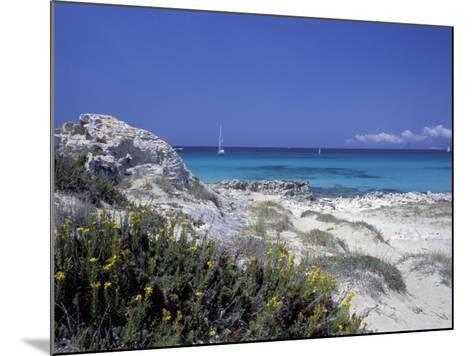 Yellow Flowers on the Beach, Formentera, Balearic Islands, Spain, Mediterranean, Europe-Vincenzo Lombardo-Mounted Photographic Print