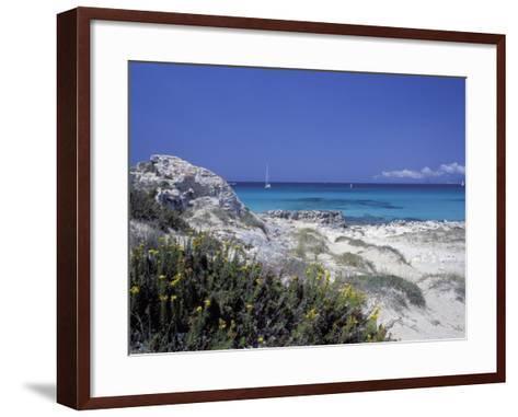 Yellow Flowers on the Beach, Formentera, Balearic Islands, Spain, Mediterranean, Europe-Vincenzo Lombardo-Framed Art Print