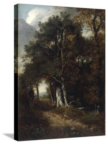 A Woodland Scene, c.1801-John Constable-Stretched Canvas Print