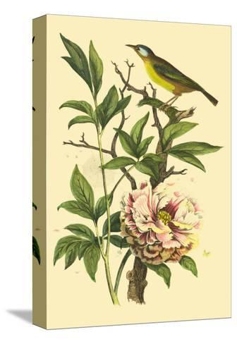 Bird in Nature III-E^ Guerin-Stretched Canvas Print