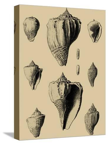 Shells on Khaki X-Denis Diderot-Stretched Canvas Print