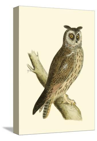 Long Eared Owl-Reverend Francis O^ Morris-Stretched Canvas Print