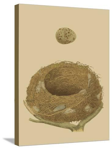 Antique Nest and Egg IV-Reverend Francis O^ Morris-Stretched Canvas Print