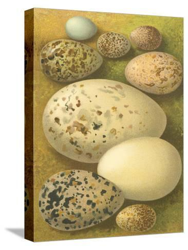 Bird Egg Collection I-Vision Studio-Stretched Canvas Print