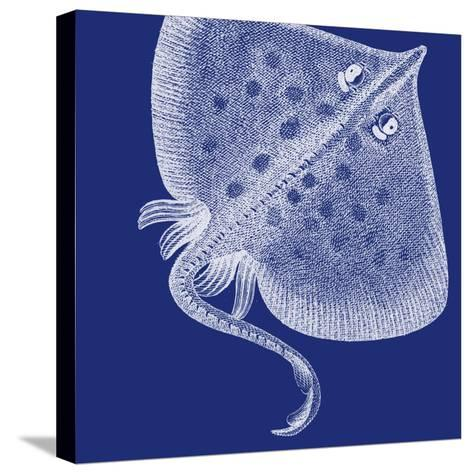 Saturated Sea Life III-Vision Studio-Stretched Canvas Print