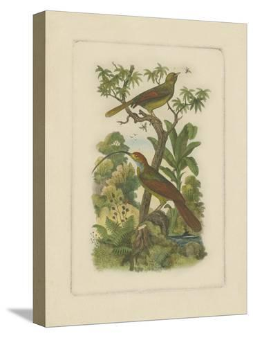 Exotic Birds I--Stretched Canvas Print