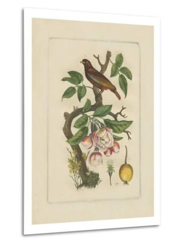 Exotic Bird and Botanical II--Metal Print