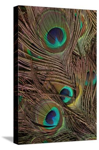 Peacock Feathers IV-Vision Studio-Stretched Canvas Print