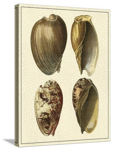 Crackled Antique Shells II-Denis Diderot-Stretched Canvas Print