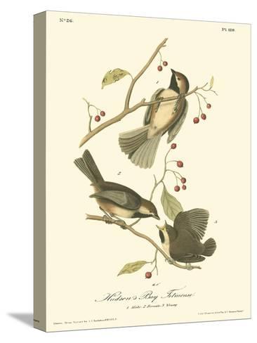 Hudson's Bay Titmouse-John James Audubon-Stretched Canvas Print