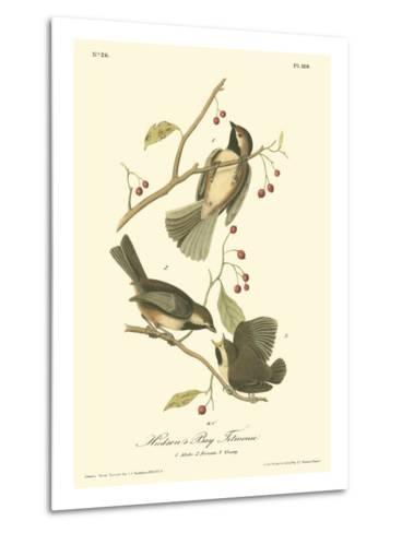 Hudson's Bay Titmouse-John James Audubon-Metal Print