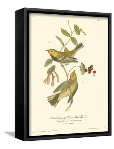 Black-throated Green Wood Warbler-John James Audubon-Framed Canvas Print