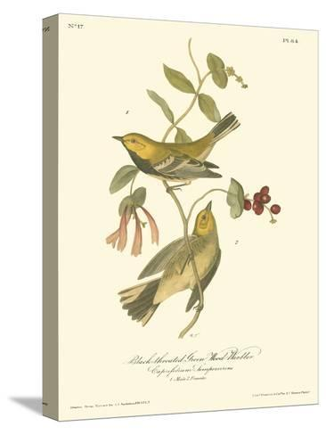 Black-throated Green Wood Warbler-John James Audubon-Stretched Canvas Print