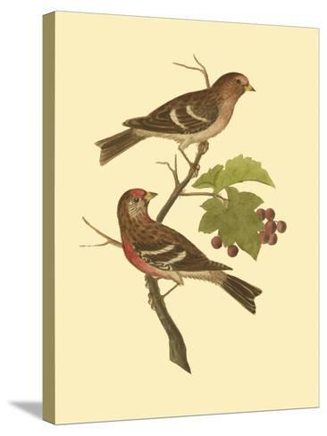 Antique Bird Pair II-James Bolton-Stretched Canvas Print