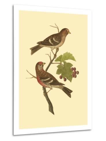 Antique Bird Pair II-James Bolton-Metal Print