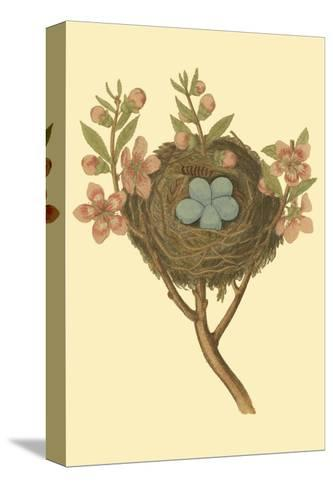 Antique Bird's Nest I-James Bolton-Stretched Canvas Print