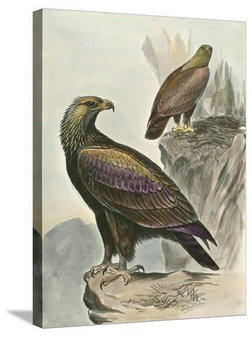Golden Eagle-F^w^ Frohawk-Stretched Canvas Print
