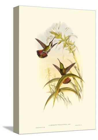 Small Gould Hummingbird I-John Gould-Stretched Canvas Print
