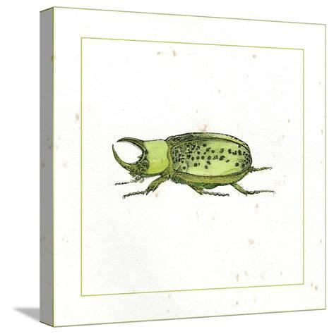 Green Beetle-Vision Studio-Stretched Canvas Print