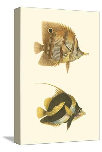 Antique Tropical Fish II--Stretched Canvas Print