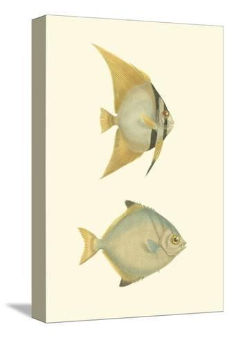 Antique Tropical Fish III--Stretched Canvas Print