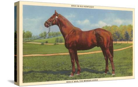 Man O'War, Kentucky Thoroughbred--Stretched Canvas Print