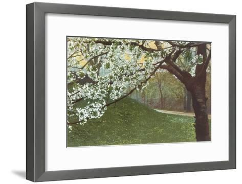 Cherry Blossoms by Grassy Hill--Framed Art Print