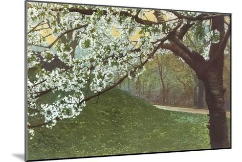 Cherry Blossoms by Grassy Hill--Mounted Art Print