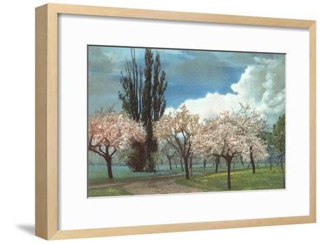 Peach Blossoms, Country Lane--Framed Art Print